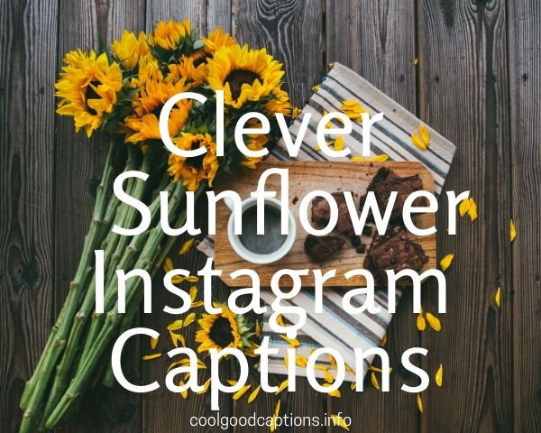 75 Sunflower Instagram Captions Funny Sunflower Field Quotes