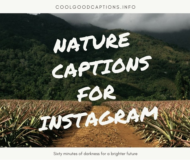 101 Cute Nature Captions For Instagram Scenery Captions Quotes